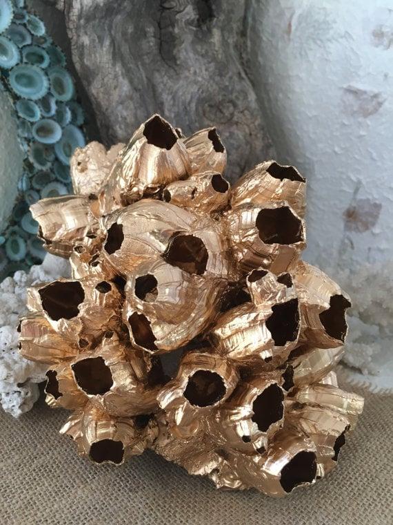 Golden Barnacle Cluster Sculpture - Seashells by Seashore