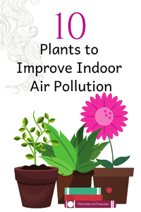 10 Plants to Improve Indoor Air Pollution