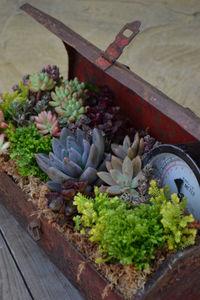 the-garden-glove-toolbox-planter
