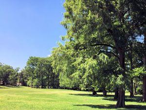 Carolina Place - Wallace Park