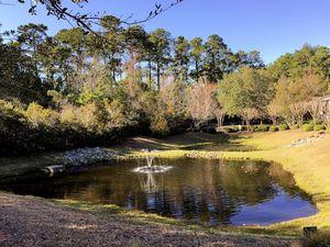 Marsh Oaks - Pond