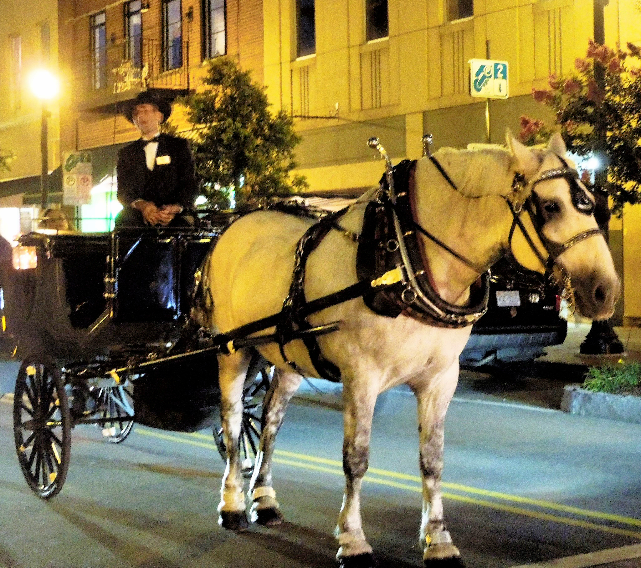 Horse and Carriage in Wilmington NC