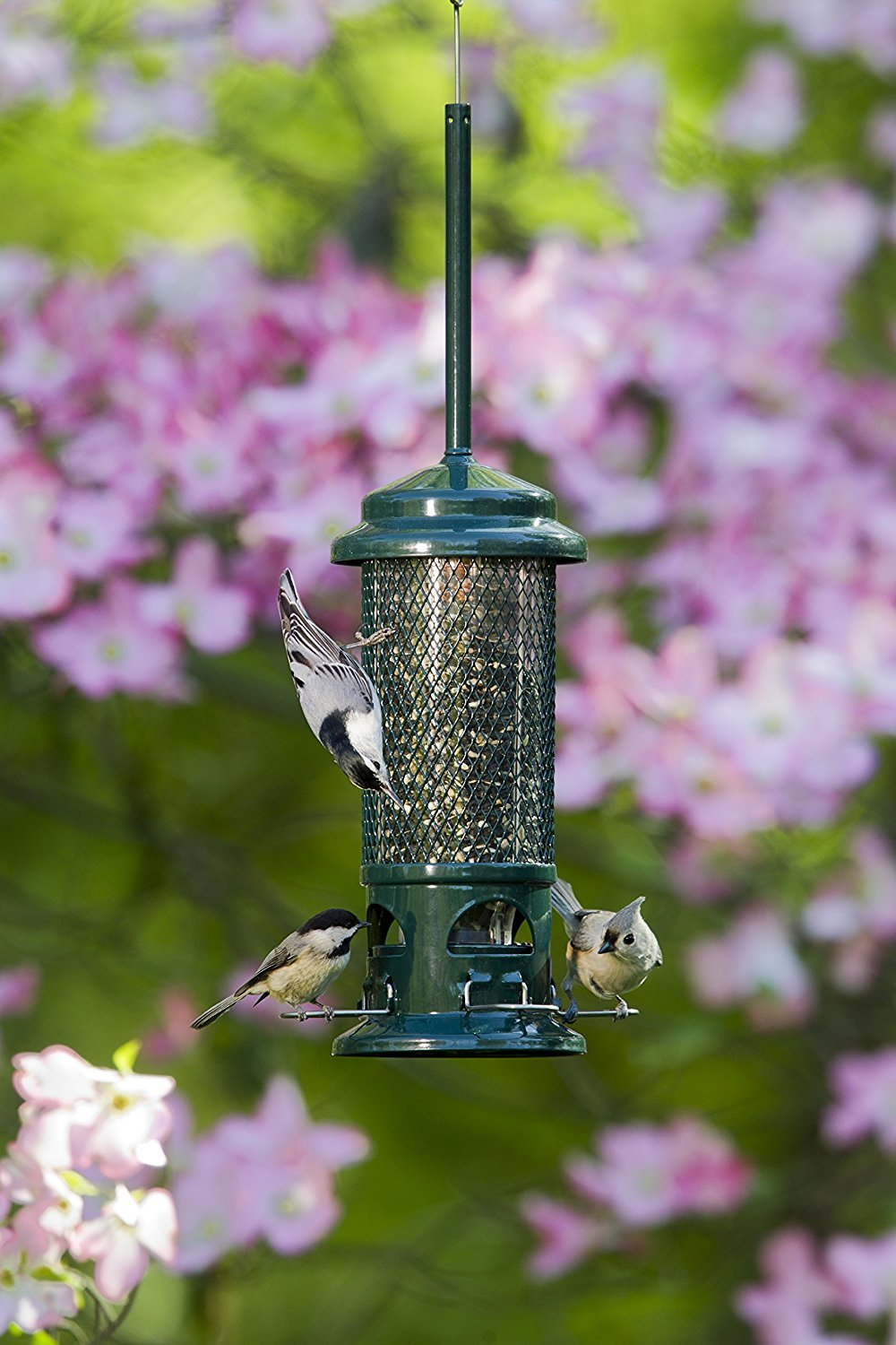 Brome 1057 Squirrel Buster Wild Bird Feeder with 4 Metal Perches