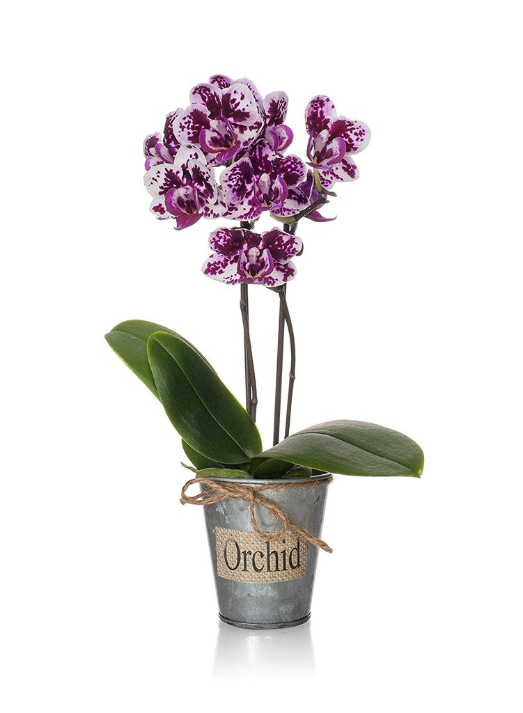 Just Add Ice Rustic Mini Orchid Tin