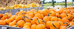 Pumpkins - Fall - Pixabay - Coastal North Carolina