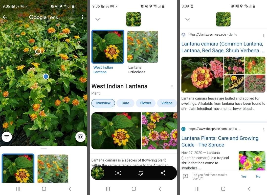 Google Lens - Plants