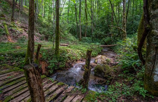 412-Butterfly-Cove-Franklin-NC-56