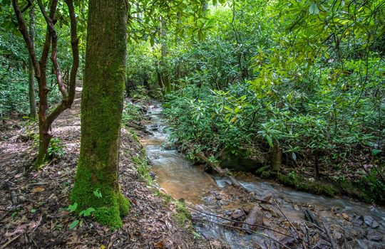 412-Butterfly-Cove-Franklin-NC-61