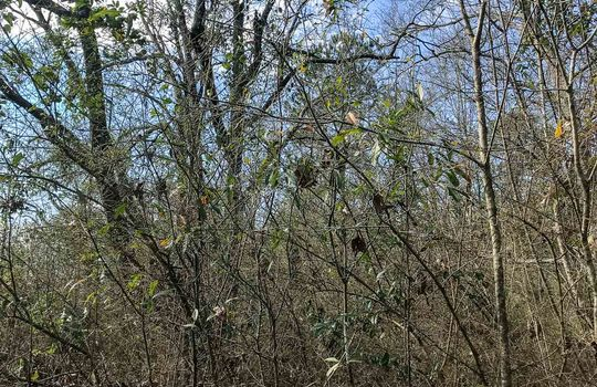 17 Pike-Magnolia Progress Rd-4