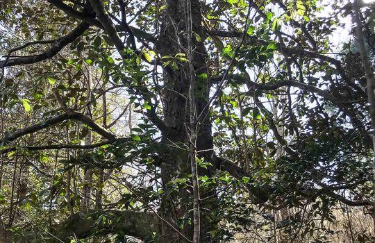 17 Pike-Magnolia Progress Rd-9
